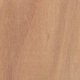 lyptus-500.jpg